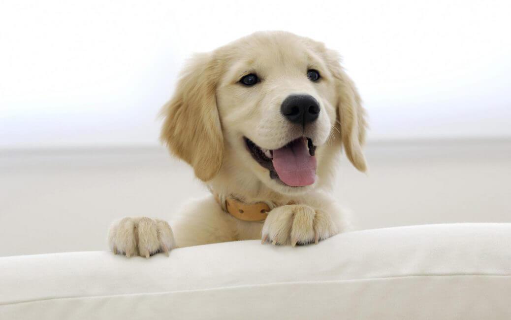 CSC-Padova-una-scuola-di-eccellenza-per-il-tuo-cane