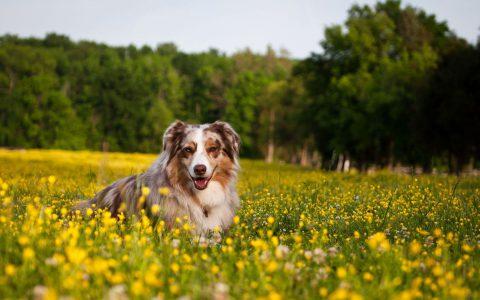 Antipulci naturali per cani, l'olio di neem è un rimedio efficace