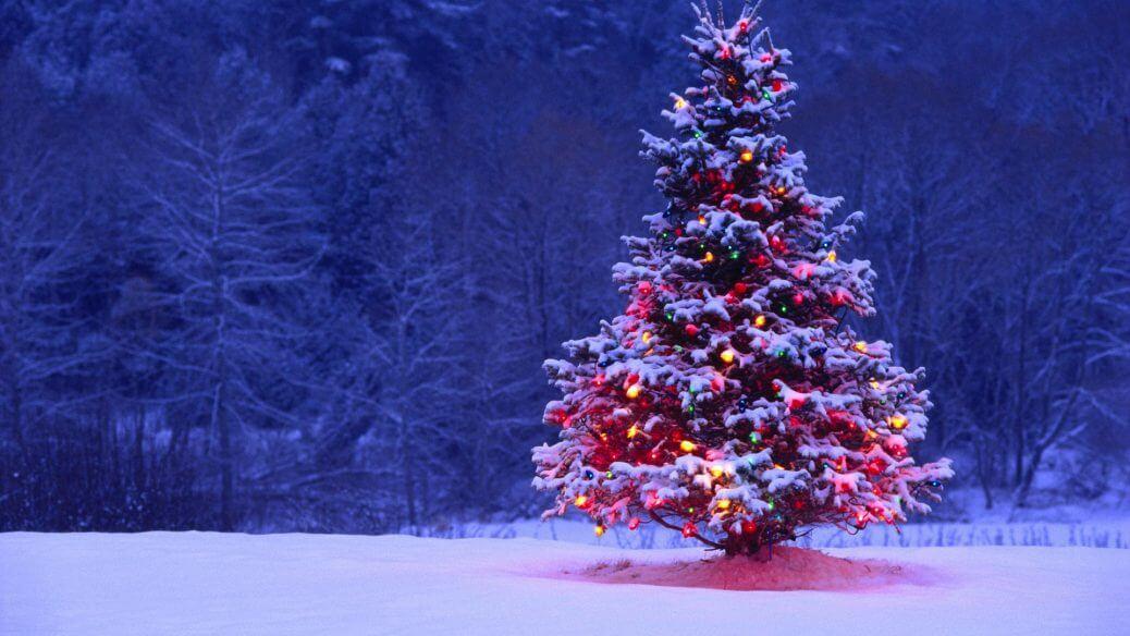 Albero-di-Natale-ecosostenibile-qualche-consiglio