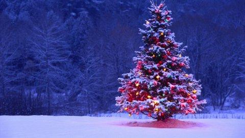 Albero di Natale ecosostenibile, qualche consiglio