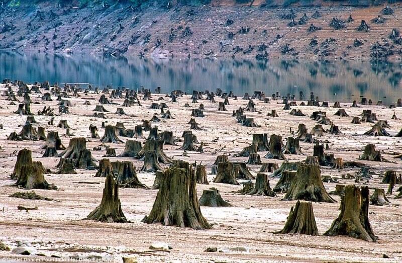 10-foto-pazzesche-sullo-stato-del-nostro-pianeta-disboscamento-oregon