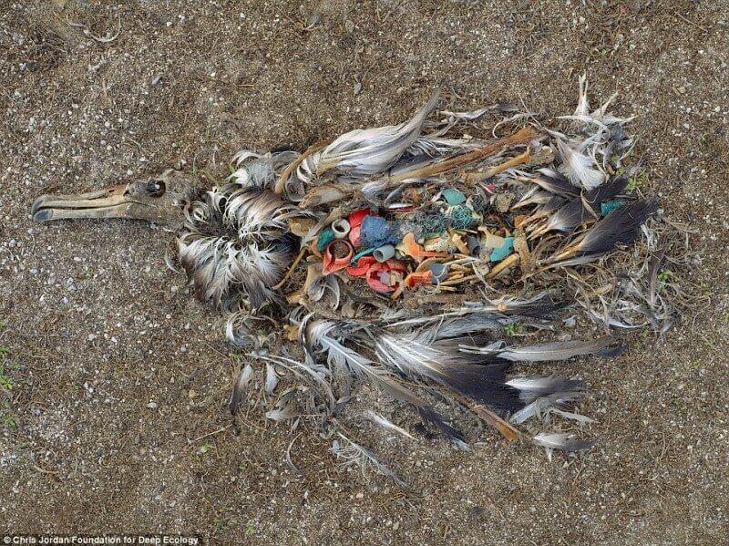 10-foto-pazzesche-sullo-stato-del-nostro-pianeta-uccello-morto