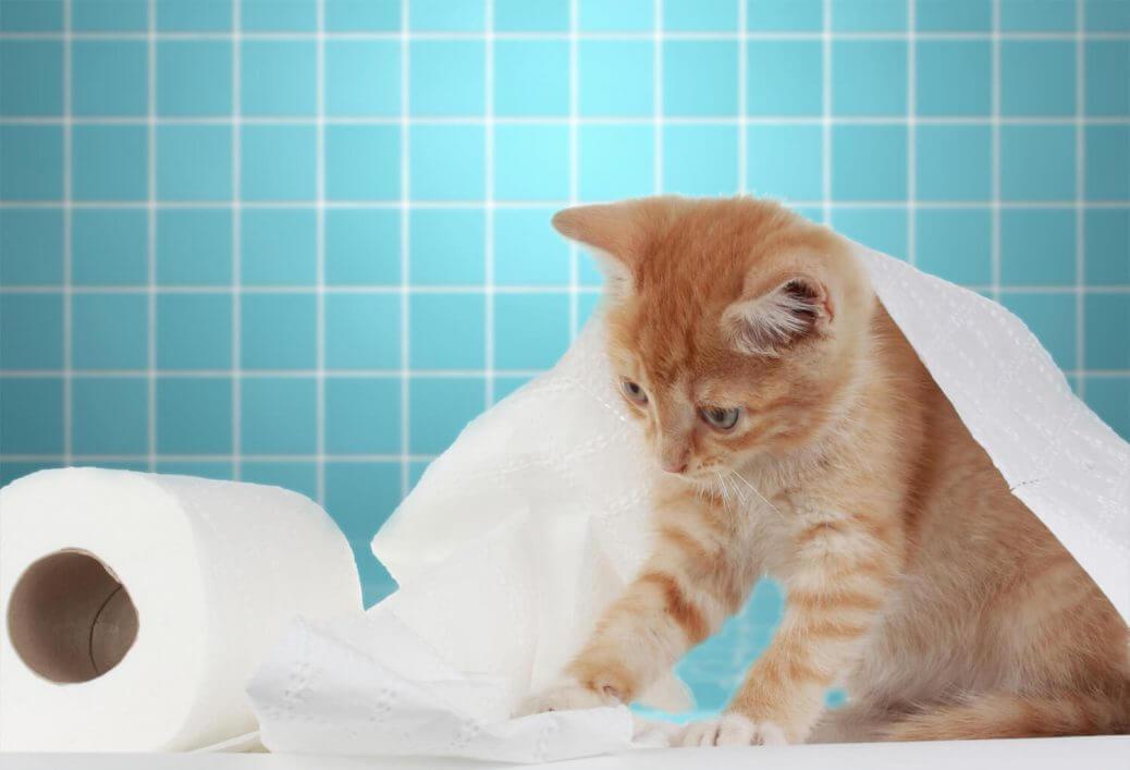 Lettiera biodegrabile per gatti