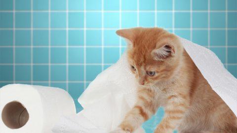 Lettiera biodegrabile per gatti, tanti buoni motivi per usarla