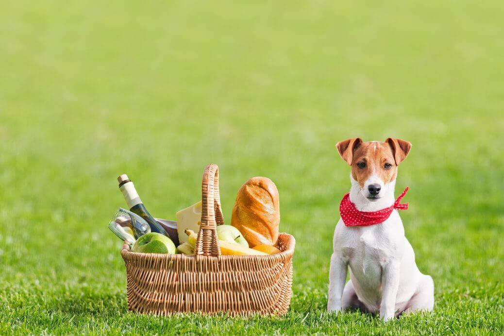 Paninetti-ai-ceci-per-il-picnic-di-Pasquetta-