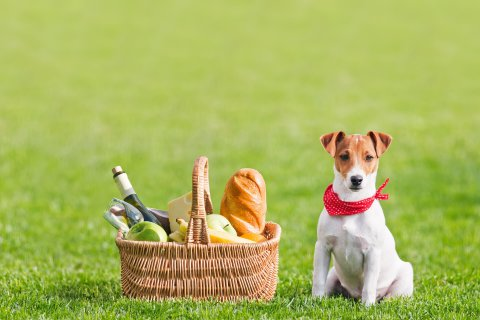 Paninetti ai ceci per il picnic di Pasquetta