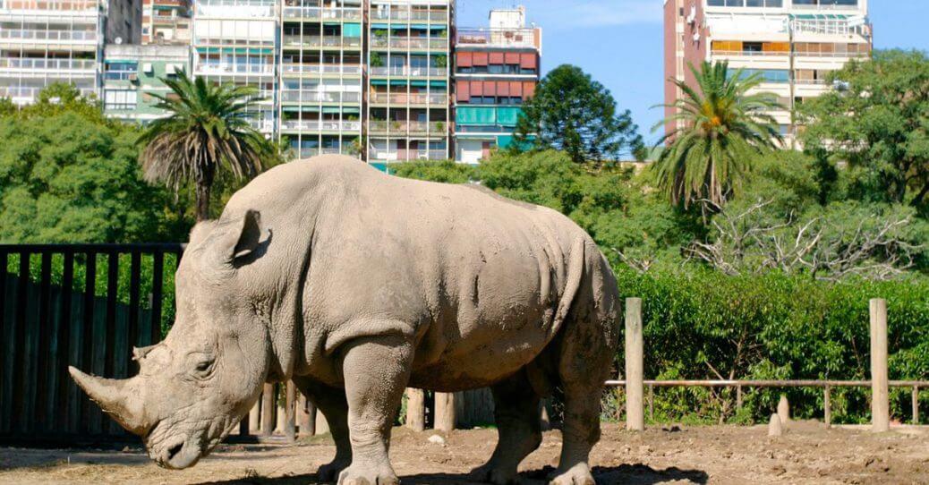 Zoo di Buenos Aires addio, finalmente al suo posto un eco-parco