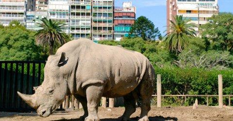 Chiude lo storico zoo di Buenos Aires, in arrivo il parco ecologico