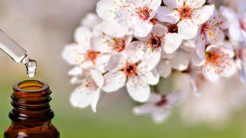 Floriterapia, curarsi con i fiori