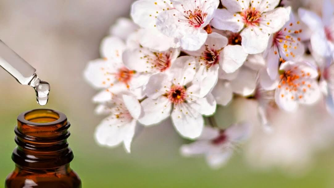 Floriterapia, ecco come curarsi con i fiori