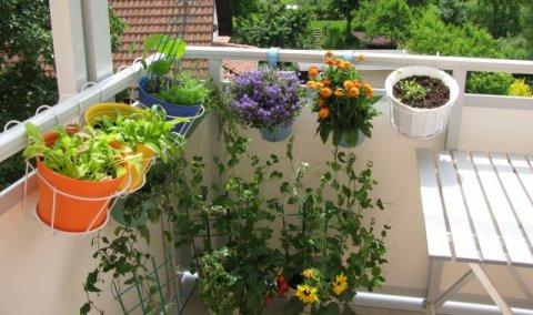 Orti domestici, l'idea green del momento