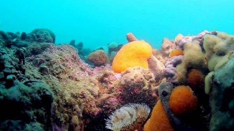 Alla scoperta delle Tegnùe con i film di mare