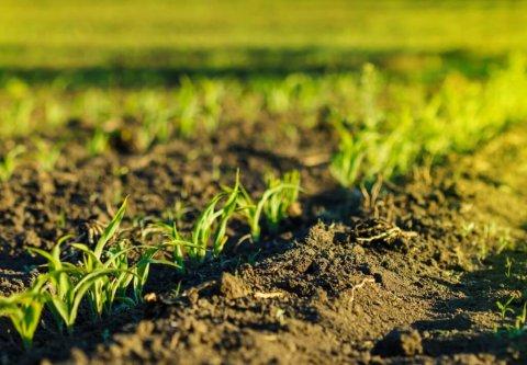 Agricoltura bio al 100% in Danimarca