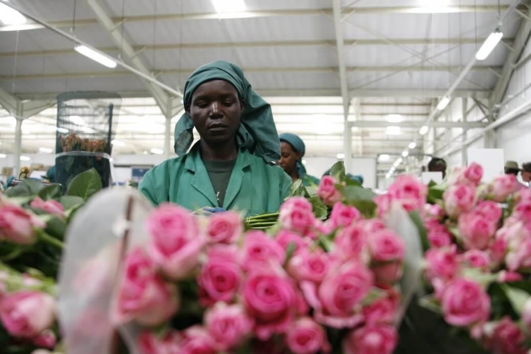 A San Valentino regala un bouqet certificato Fairtrade