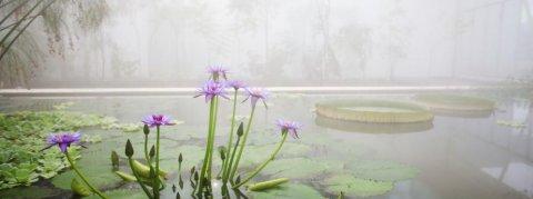 L'Orto Botanico di Padova, il Giardino della Biodiversità