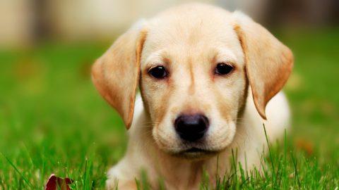 Qualche consiglio per un'alimentazione corretta per cani