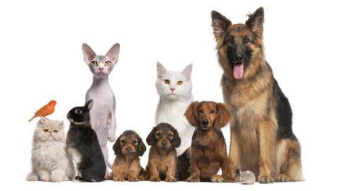 Alimentazione naturale per animali, una dieta sana per il nostro cane