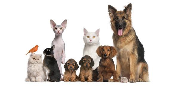 Alimentazione-naturale-per-animali-una-dieta-sana-per-il-nostro-cane-feat.jpg