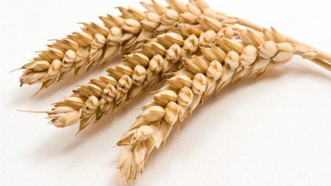 Allergia al glutine: ecco cosa mangiare