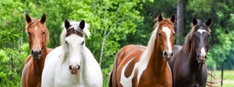 Antiparissatari naturali per cavalli, come scegliere