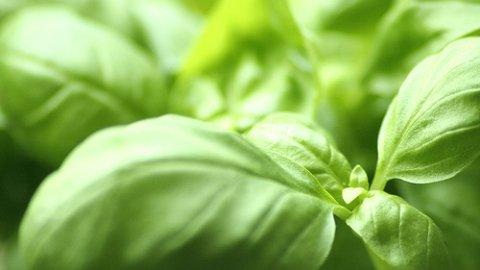 Aromaterapia: Basilico