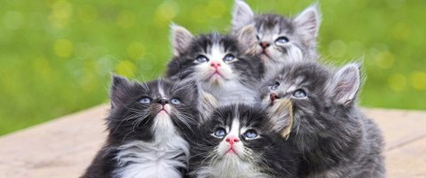 Alimentazione corretta per gatti, qualche consiglio utile