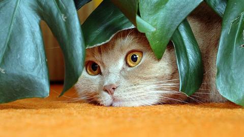 Cibo vegano per gatti, una scelta etica e sana per i nostri felini