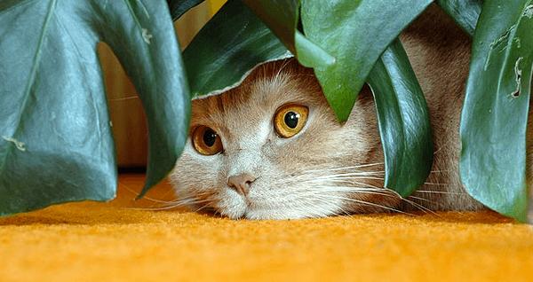 Cibo-vegano-per-gatti-una-scelta-etica-e-sana-per-i-nostri-felini2.png
