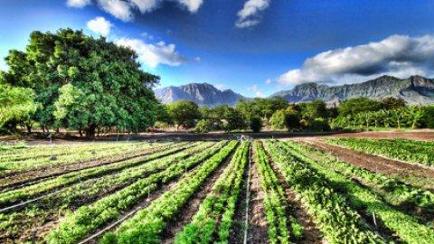 Mangiare biologico: una scelta che unisce bontà e salute