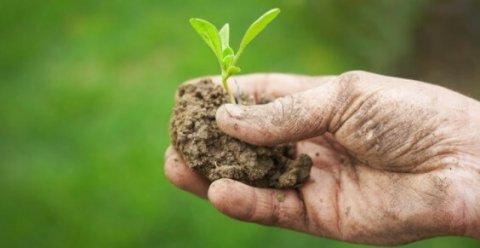 Cos'è l'agricoltura biologica?