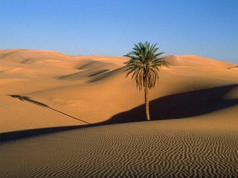 Il deserto diventa un valido aiuto contro il riscaldamento globale