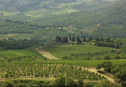 Vini vegani e affari, un ecoguerriero nel Chianti