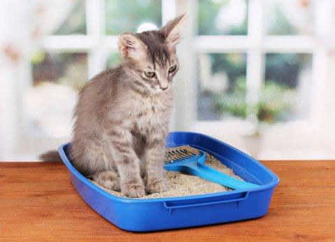 Sabbietta biodegrabile per gatti, un buon motivo per usarla