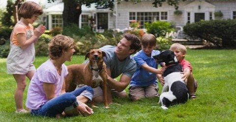 Dieta vegana per cani: un controsenso o un'ottima scelta?