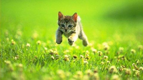 Cibo per gatti cruelty free: con un mangime 100% vegetale si può!