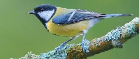 Gli uccelli che mangiano di notte