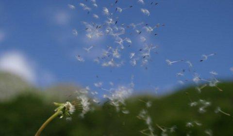 Anche se la primavera è ormai finita le allergie colpiscono ancora