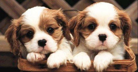 Qualche consiglio su come togliere in modo naturale le pulci dal cane