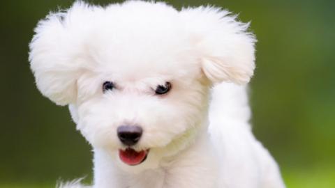 I parassiti intestinali del cane