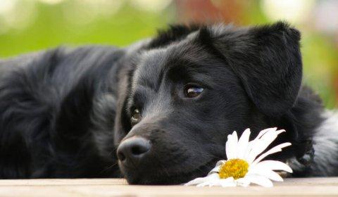 I vantaggi di un'alimentazione vegetariana per cani