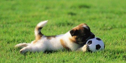 Stimolazione mentale nel cane con il gioco