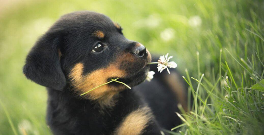 Una-dieta-canina-corretta-con-mangimi-100-vegetali-feat.jpg
