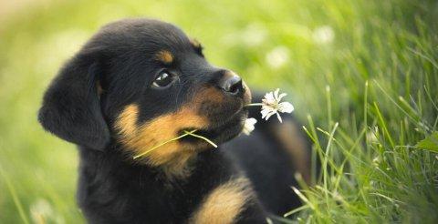 Una dieta canina corretta con mangimi 100% vegetali