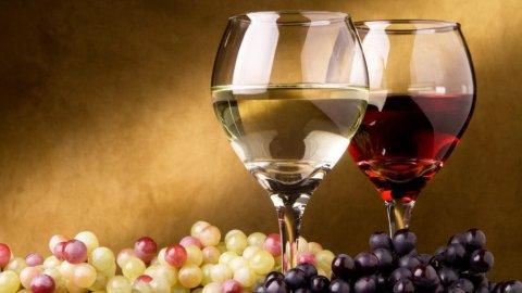Vino biologico, ecco quando un vino può essere definito bio