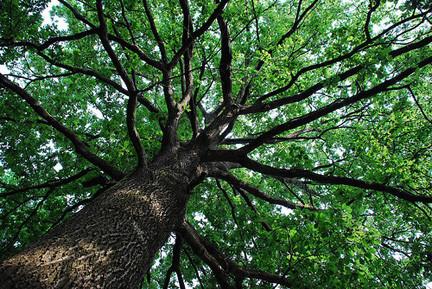 albero1.jpg