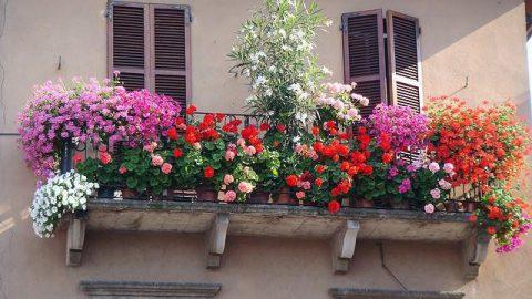Tutti i segreti per avere un balcone fiorito
