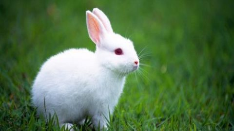 Finally EU ban on animal testing comes into effect