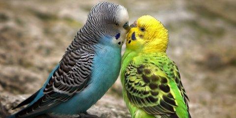 Gli uccelli profumati fanno più sesso