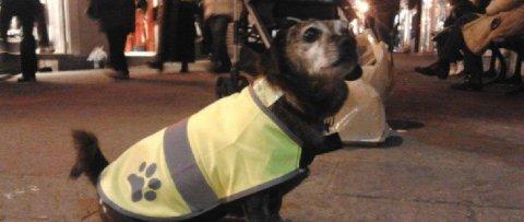 Addio a Camillo, il cane che prendeva l'autobus
