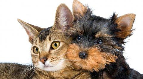 Expo 2015 vietato a cani e gatti